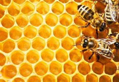 Bienen in Waben