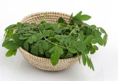 Die Moringa-Pflanze