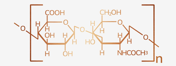 Acide hyaluronique Production