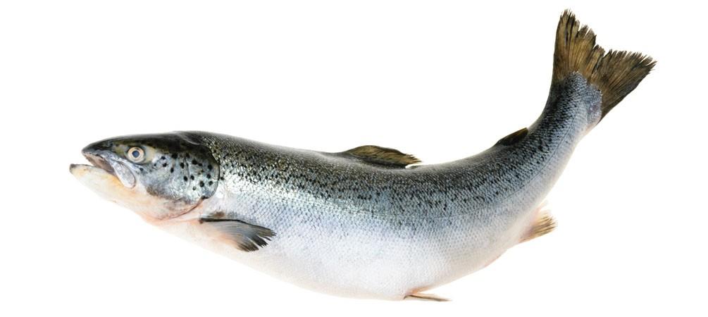 Plusieurs sortes de poissons contiennent de la vitamine D
