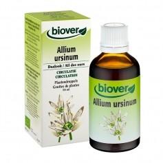 Biover Allium ursinum (Ail des ours)