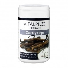 Cordyceps Vitalpilz Extrakt Kapseln