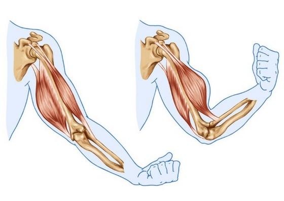 Muskelaufbau gefällig? - Muskeln aufbauen mit System   nu3